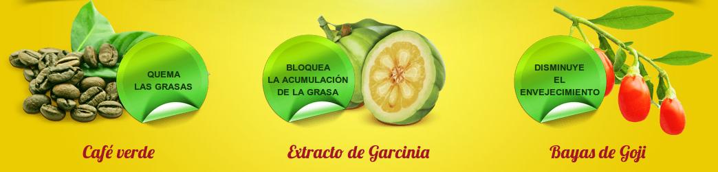 ingredientes fitospray cafe verde extracto de Garcinia Bayas de Goji