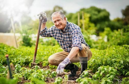 hombre, jardin con hierbas