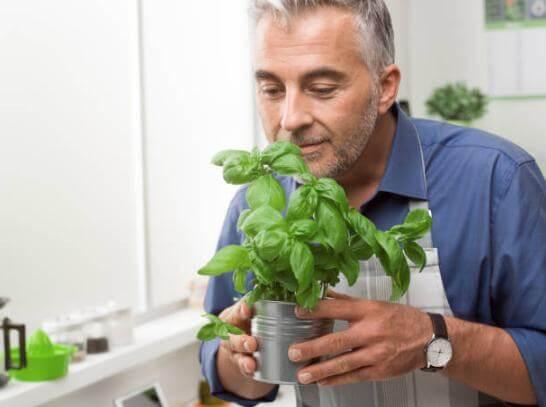 hombre, prostata, hierbas
