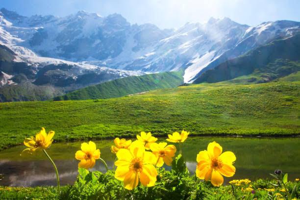 Montaña Arnica