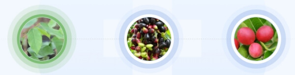 gotas diabetes Ingredientes