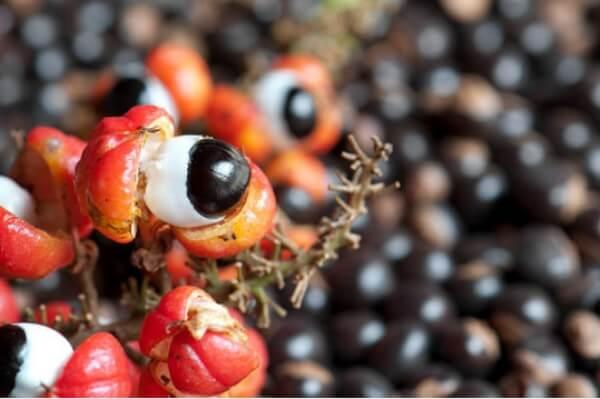 Fruta y raíz de guaraná